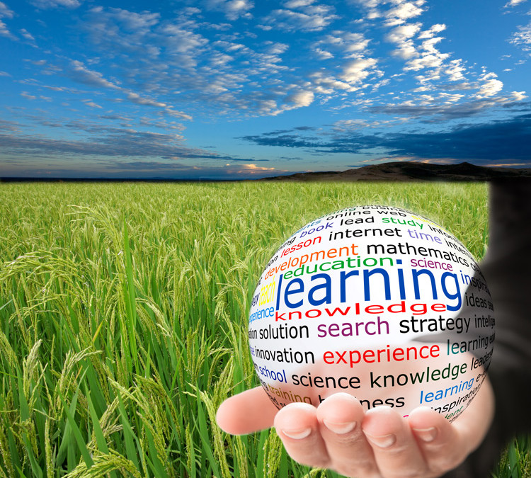 Rice Milling – The New Kid's Perspective